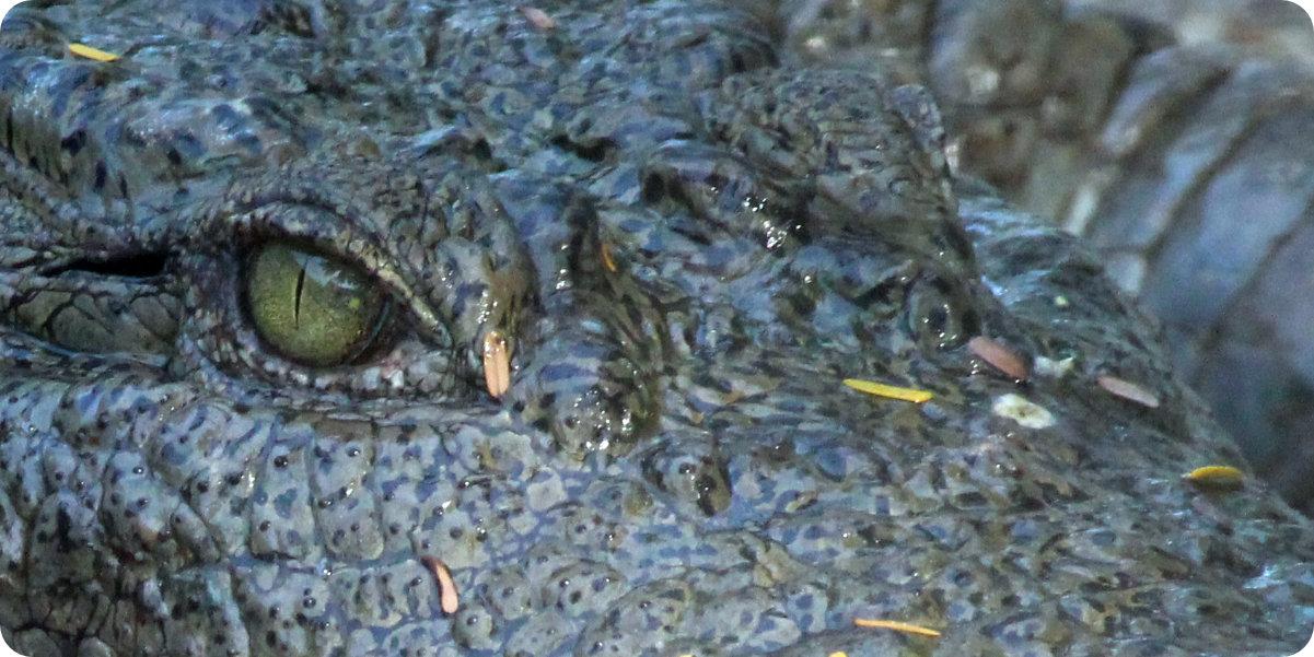 Eyes of a crocodile - 4 Fantasy-Autoren, die Noch Aktiv sind und Mehr Lob Lrauchen