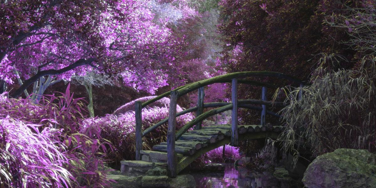purple garden - Rezensionen